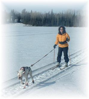 Skijouring Kit