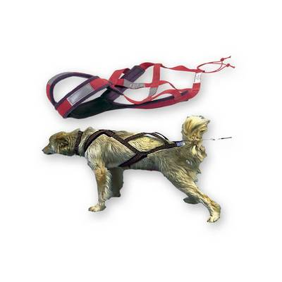 X- Back Dog Harness