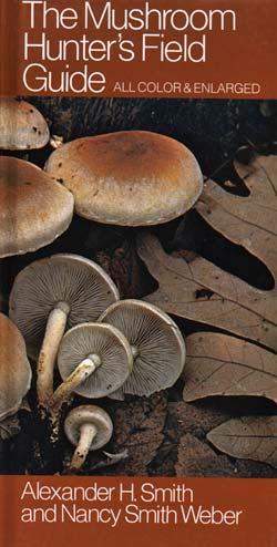 Agaricus campestris, field mushroom.