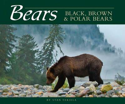 Bears : Black, Brown, And Polar Bears