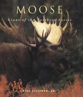 Moose By Bill Silliker