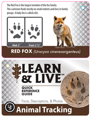 Live & Learn- Animal Tracking Cards