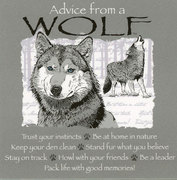 Advice from a Wolf MAGNET