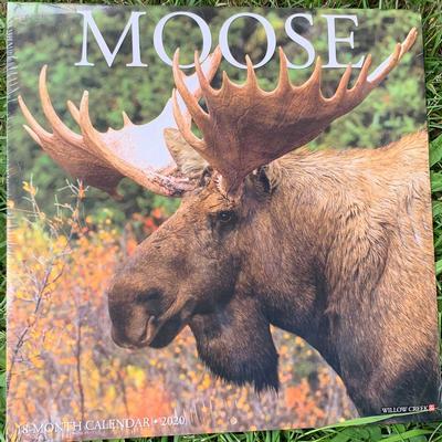 Moose Wall 2020