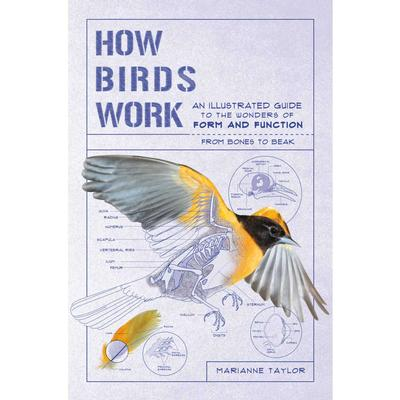 How Birds Work