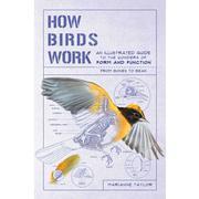 How Birds Work