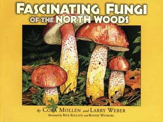 Fascinating Fungi Of The North Woods